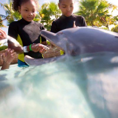 Las 10 mejores excursiones caribeñas para niños y jovenes